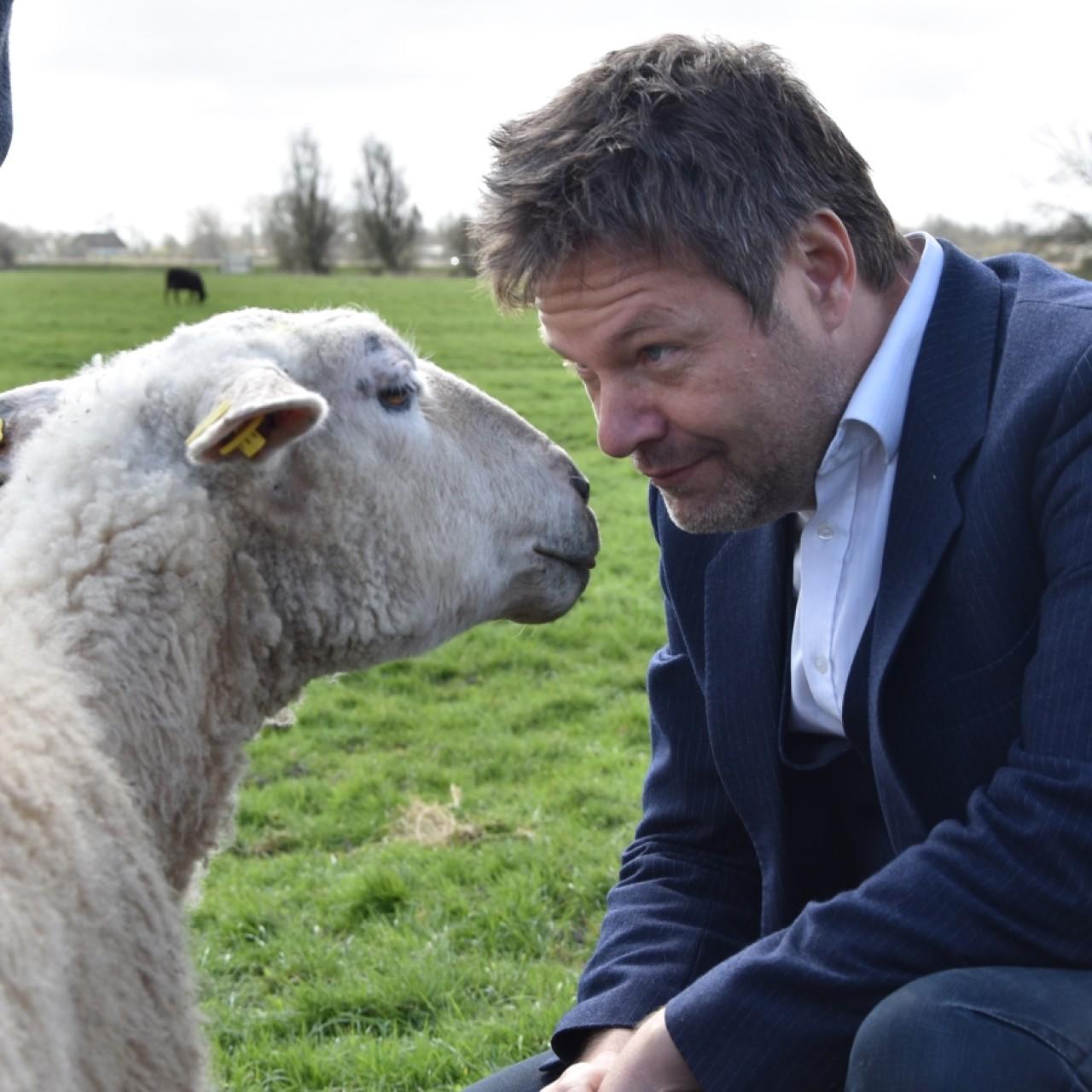 Habeck und die Schafe